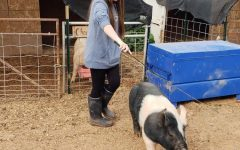 FFA Animal Care and Showing