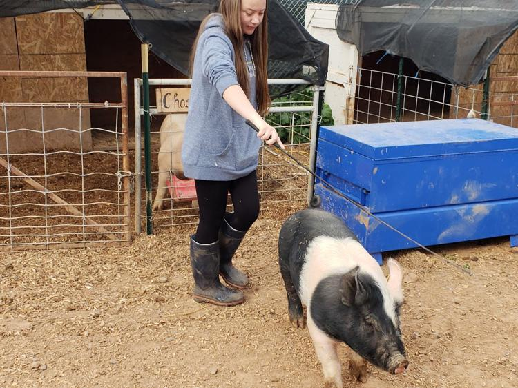 Alyssa+Carrier+walking+her+pig.